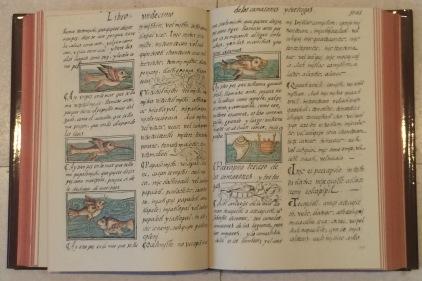 Libro undécimo de los camarones y tortugas